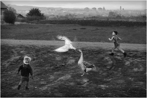 B2-Bojan Petrovic-Run bw