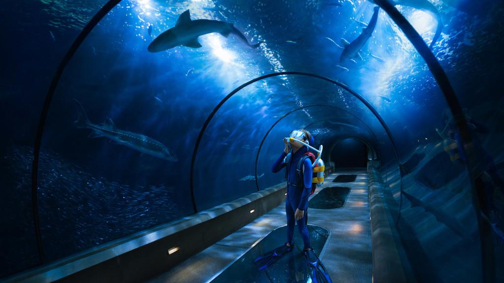 Aquarium_Woodman